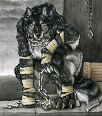 Vyvolávači s podsvětí - Fotoalbum - vlkodlaci - šedý vlkodlak